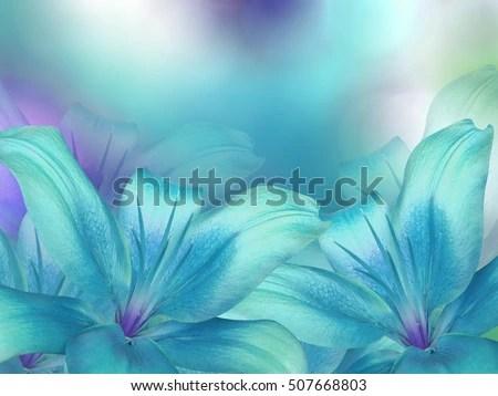 Blue Turquoise Lilies Flowers On Turquoisepurpleblue Stock Photo