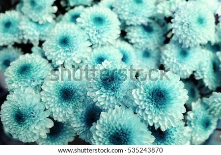 Turquoise Flower Background Stock Photo (100 Legal Protection