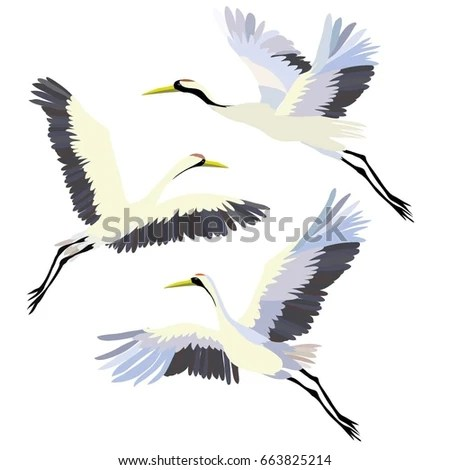 Wisteria Falls Wallpaper Crane Bird Stock Images Royalty Free Images Amp Vectors