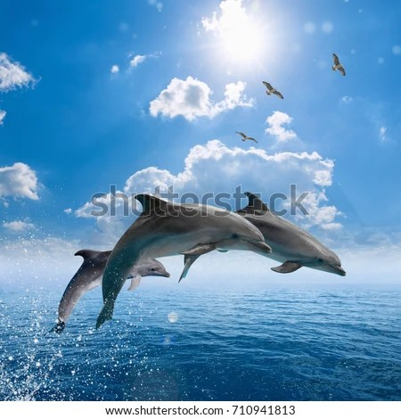 Cute Baby Animals Wallpaper Icon Dolphin Stock Images Royalty Free Images Amp Vectors