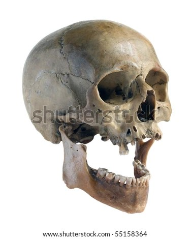 Skeleton Head Wallpaper 3d Human Jaw Stock Images Royalty Free Images Amp Vectors
