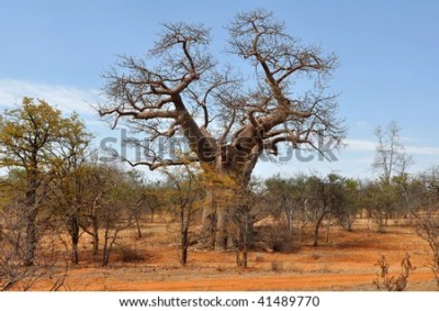 Limpopo Stock Photos, Images, & Pictures | Shutterstock