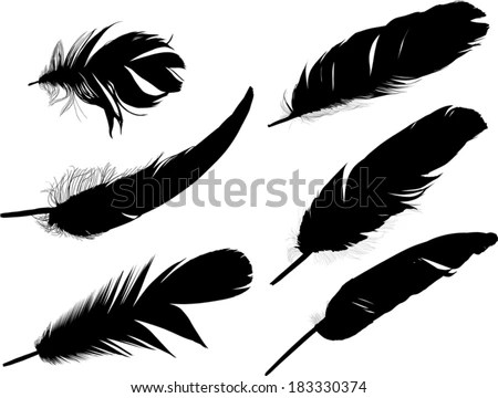 Pink Feathers Falling Wallpaper White Feather Black Background Stock Photos Images