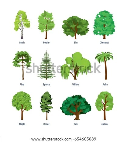 Collection Different Kinds Trees Birch Poplar Stock Vector (Royalty