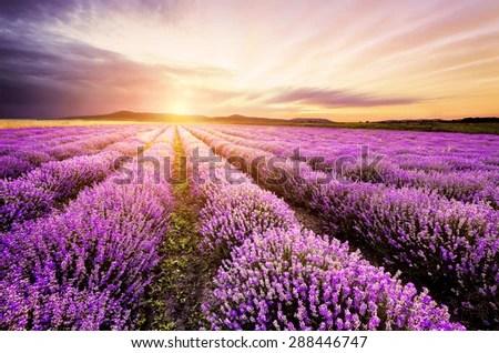 Hd Lavender Wallpaper Sunrise Over Lavender Field Bulgaria Stock Photo Royalty