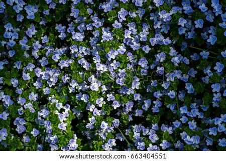 Blue Flowers Backgrounds Stock Photo 663404551 - Shutterstock - blue flower backgrounds