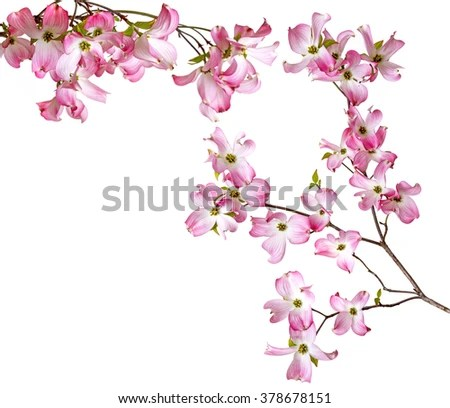 Cherry Blossoms Falling Stylized Wallpaper Cherry Blossom Flower Stock Images Royalty Free Images