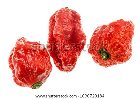 Carolina Reaper Medium Sized Chili Pepper Stock Photo (Royalty Free