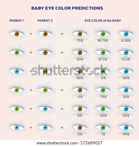 Baby Eye Color Prediction Chart Icons Stock Vector (2018) 572689027 - baby chart