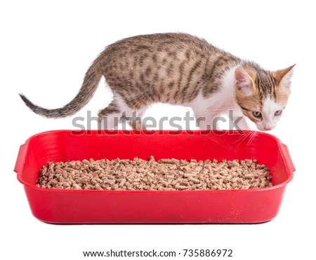 Cat Litter Tray Stock Images Royalty Free Images