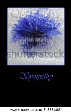 Black Sympathy Card Blue Flower Ice Stock Photo (Royalty Free