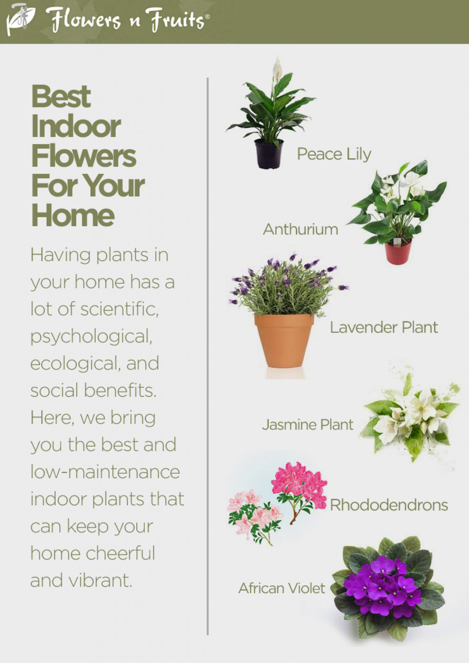 Best Indoor Flowers For Your Home Visual Ly