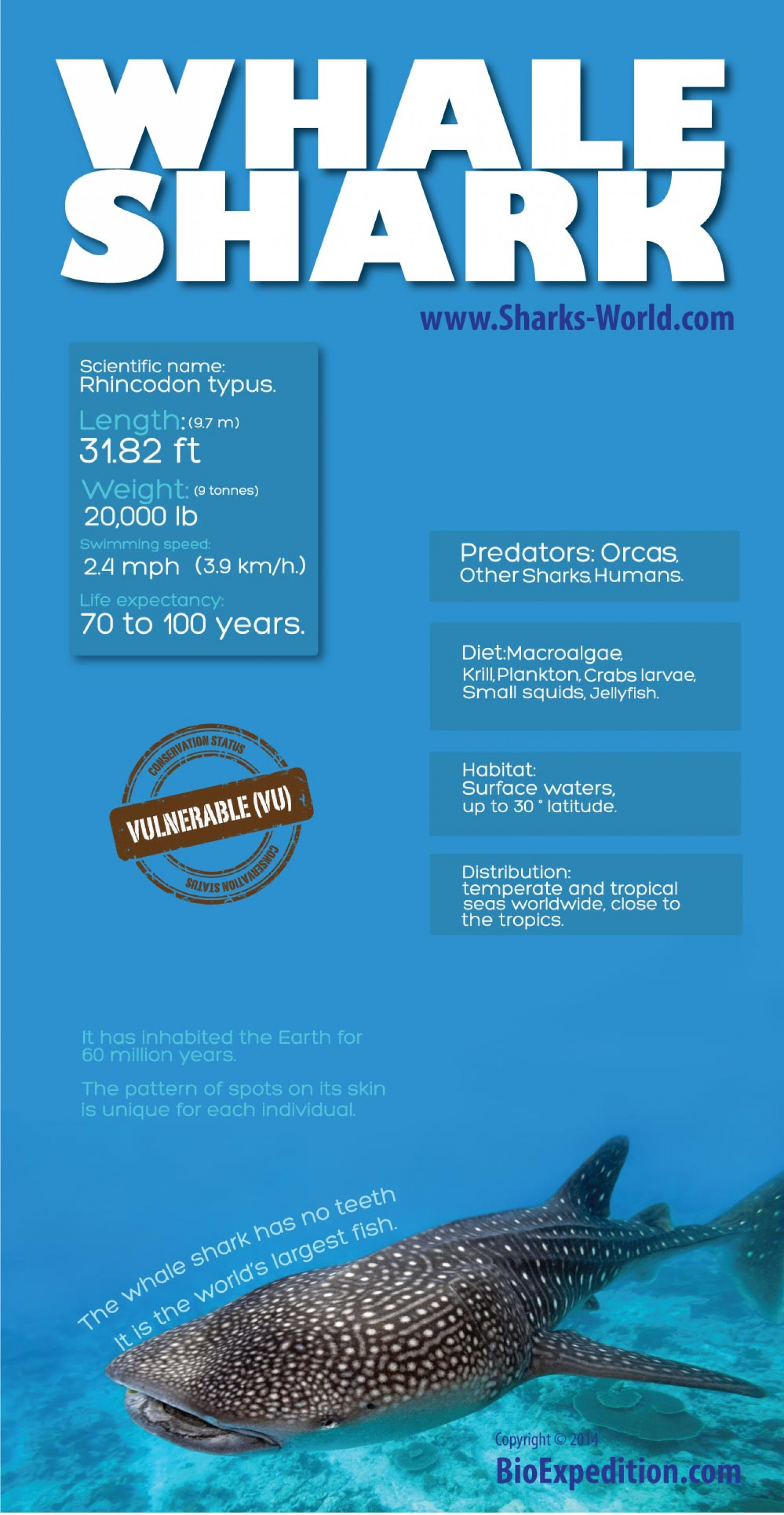 whale shark infographic