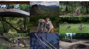 Monkey Kingdom 2015 movie screenshot
