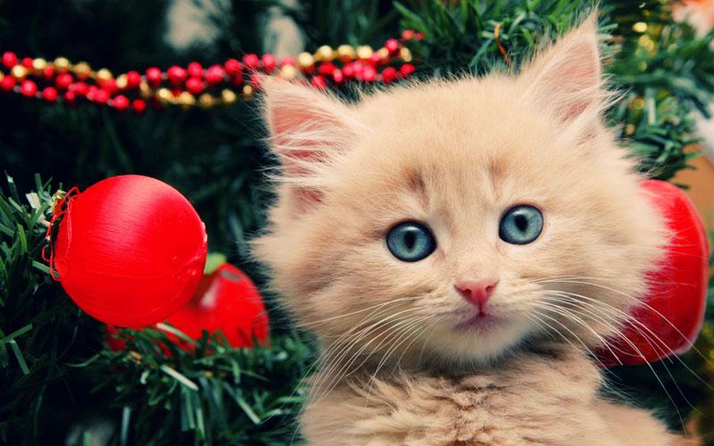 Cute Little Kitten Desktop Wallpapers Cute Christmas Animals 29