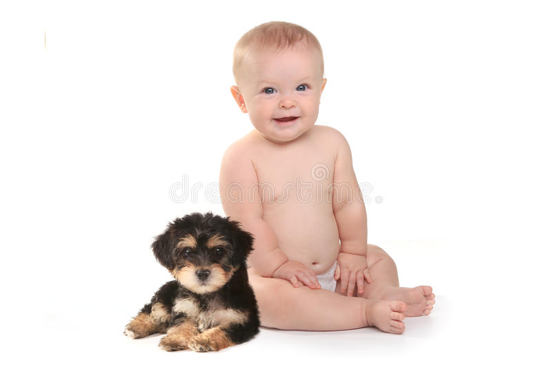 Newborn Baby Yorkies Adorable Baby Boy With His Pet Teacup Yorkie Puppy Stock
