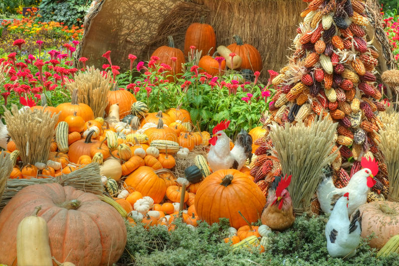 Fall Flowers And Pumpkins Wallpaper A Bountiful Autumn Harvest Stock Photo Image Of Bountiful