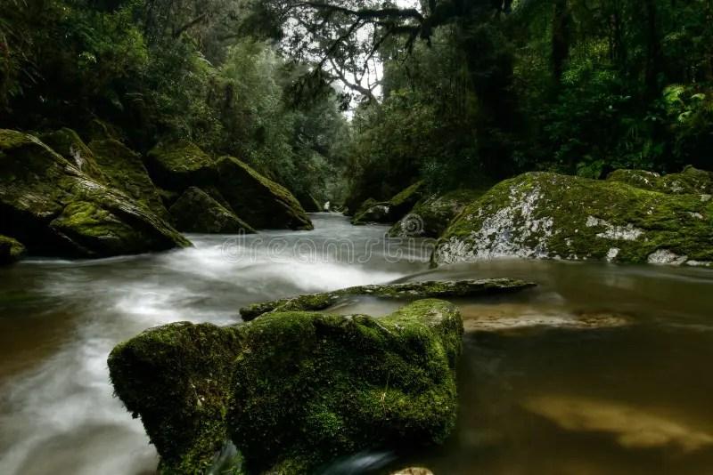 Free Fall Forest Wallpaper Cave Creek Paparoa National Park New Zealand Royalty Free