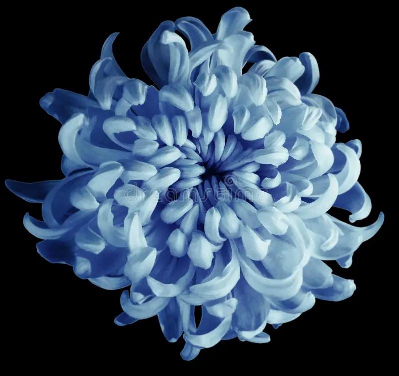 Turquoise Flower Background cvfreepro