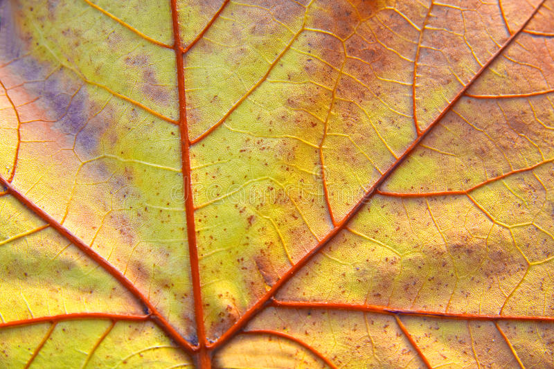 Fall Colored Background Wallpaper Close Up Autumn Leaf Stock Images Image 12106614