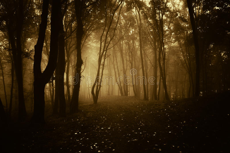 Gloomy Fall Wallpaper Dark Forest With Fog At Sunset Stock Photo Image 40989350