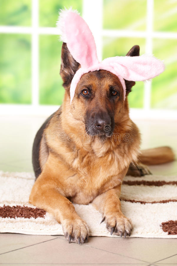 Cute Rabbit Wallpaper Free Download Easter Bunny Dog Royalty Free Stock Photo Image 12889325
