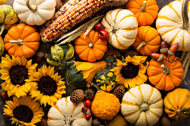 Fall Sunflower Wallpaper Fall Background With Pumpkins Stock Image Image Of