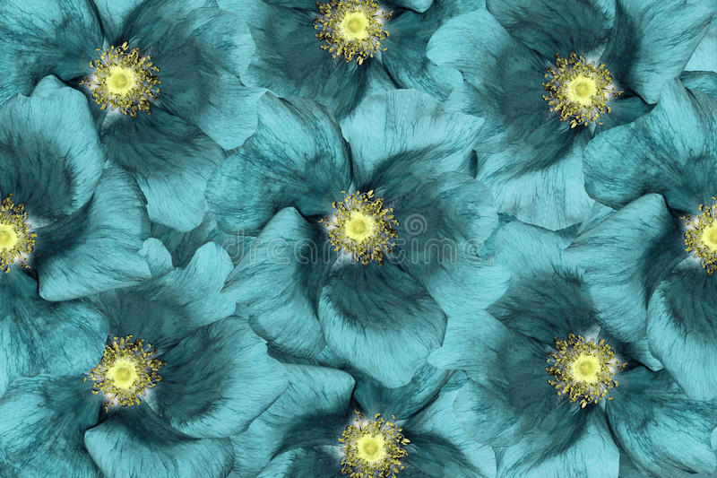 Floral Background Turquoise Flowers Floral Collage Flower