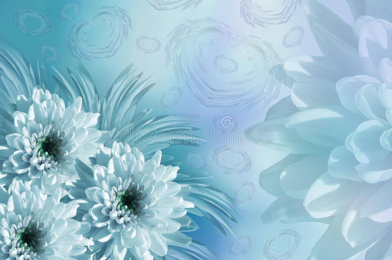 Flowers Background Flowers White-turquoise Chrysanthemums Floral