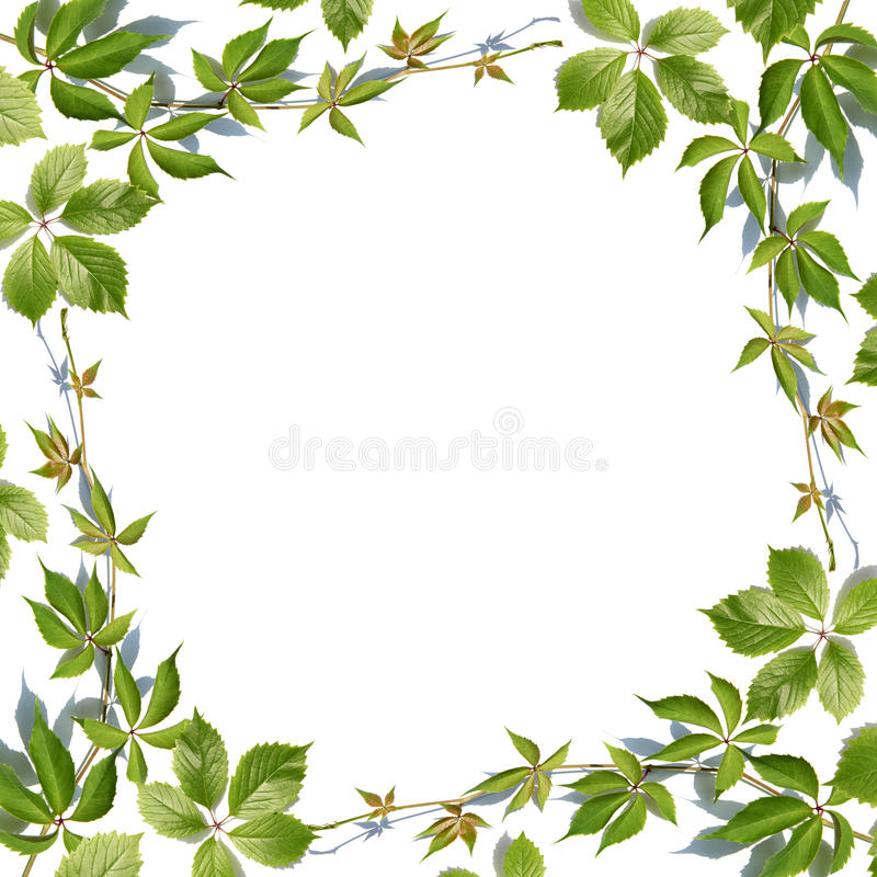 Encadrement Grand Format Fresh Green Leaves Border On White Stock Photo - Image Of