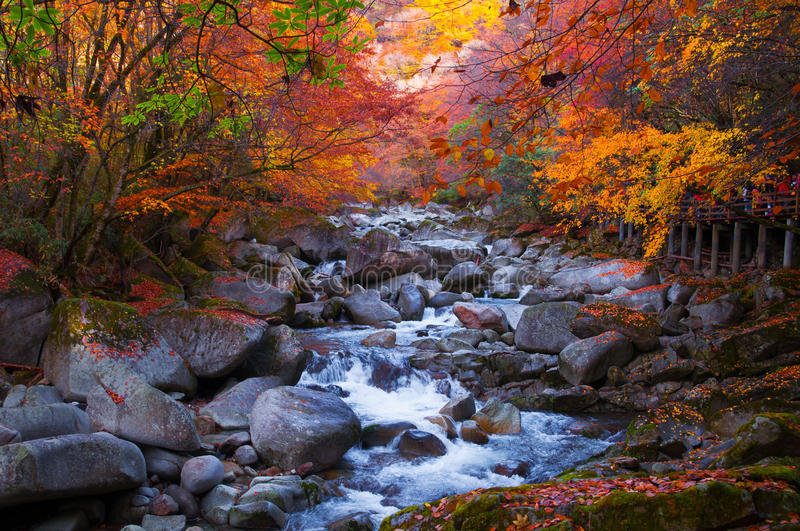 Fall Wooded Wallpaper Golden Fall Forest And Stream Stock Photo Image 46581962