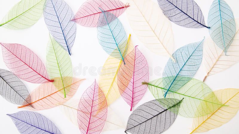 Pretty Fall Wallpapers Leaves Background In Pretty Pastel Colors Stock Image