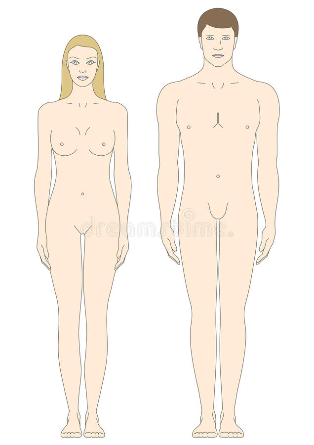 Male And Female Body Templates Stock Vector - Illustration of female