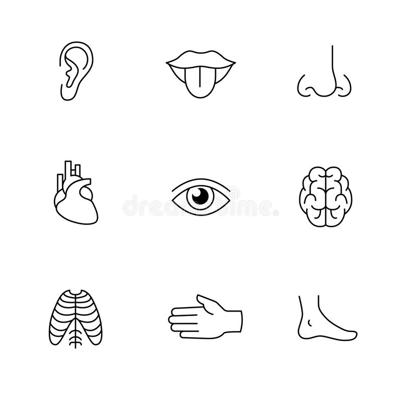 Aborigines Symbole Medical Icons Thin Line Art Set. Human Organs Stock Vector