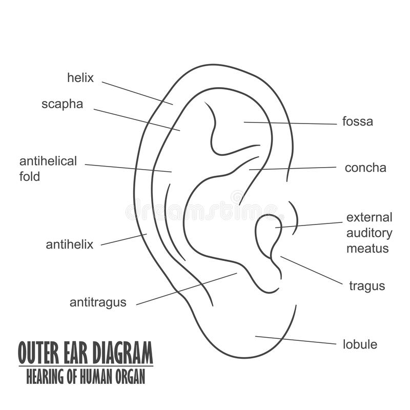 diagram ear canal