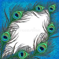 Peacock feather banner stock illustration. Illustration of ...
