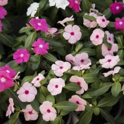 Small Cute Flowers Red and Pink Colors Stock Image Image Of