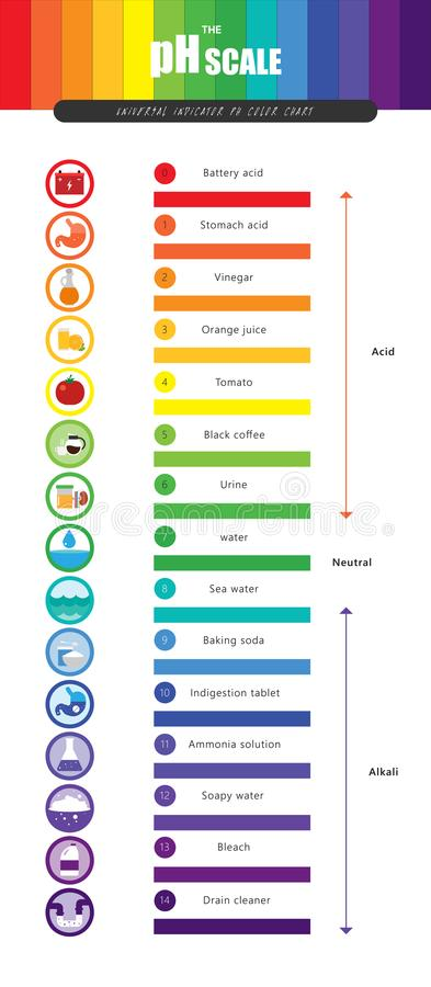 The PH Scale Universal Indicator PH Color Chart Diagram Stock Vector - ph chart