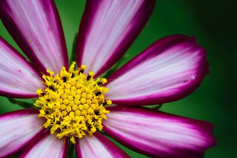 purple flowera