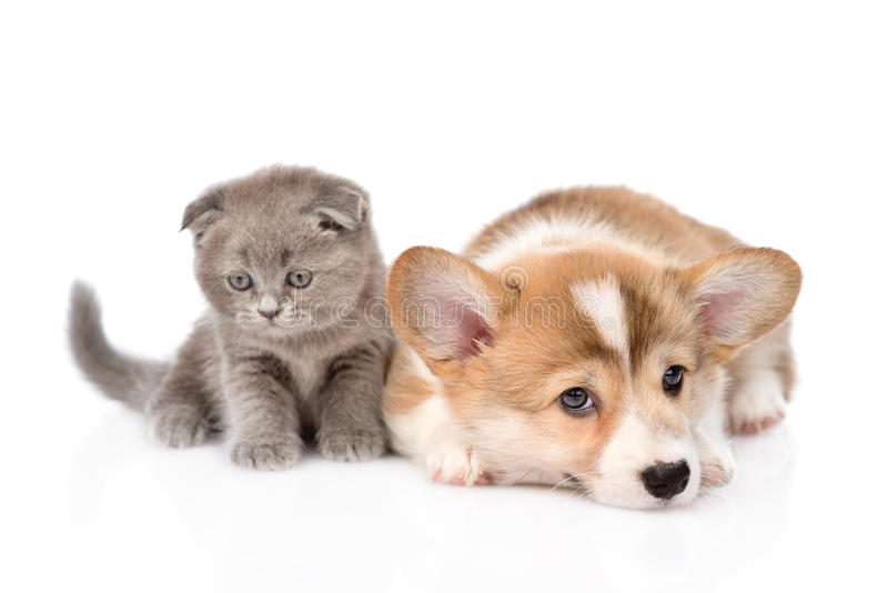 1000 Wallpapers Cute Sad Cat And Dog Together Isolated On White Background