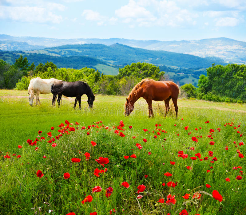 Horses In The Fall Wallpaper There Horses Grazing Grass Stock Photo Image Of Grazing