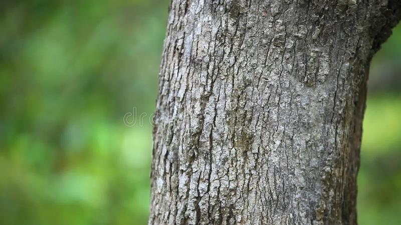 Tree Trunks In Nature Blurred Background HD Stock Footage - Video