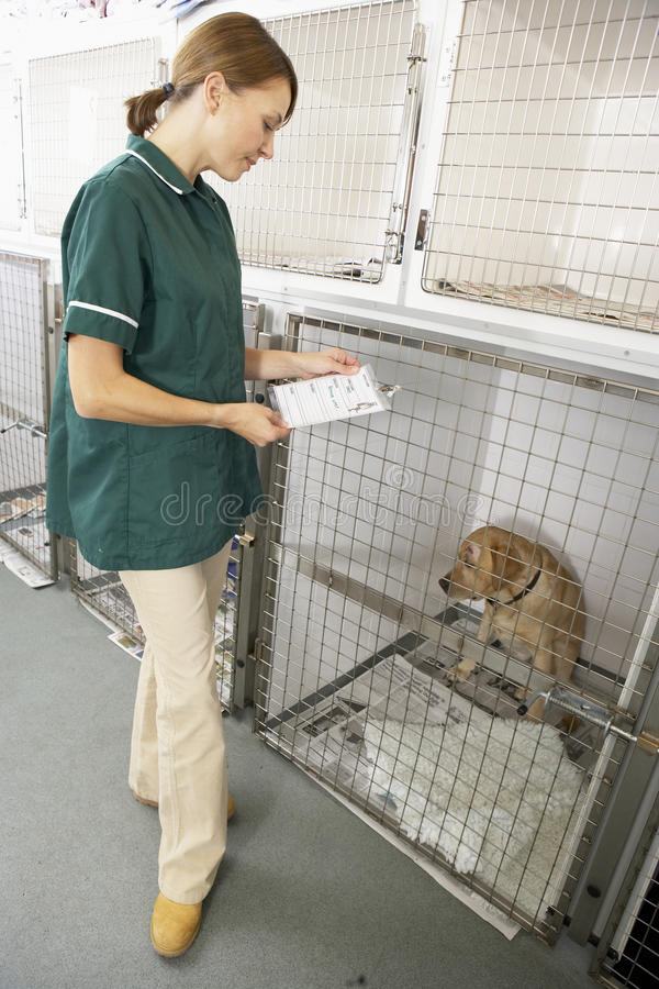 Vetinary Nurse Checking Sick Animal In Pen Stock Photo - Image of