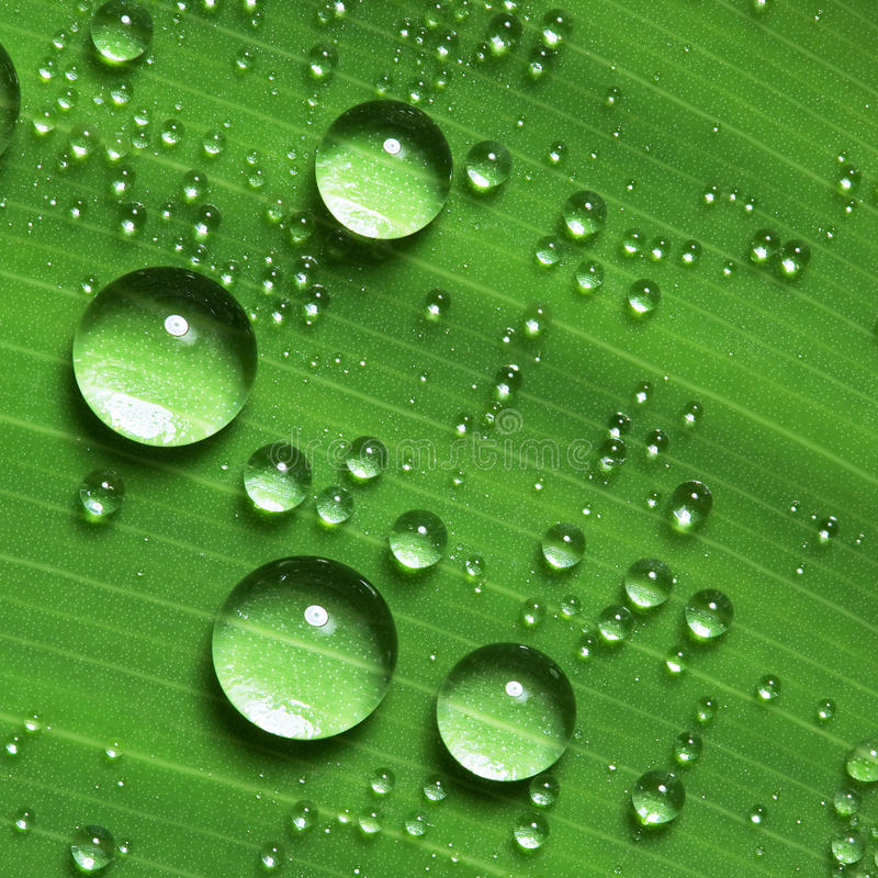 Drop Of Water Falling From A Leaf Wallpaper Water Droplets On Leaf Stock Image Image Of Closeup