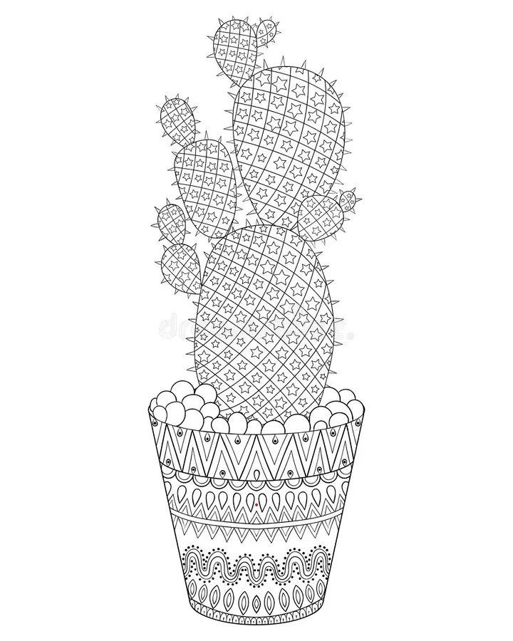 cactus vector art