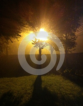 Tree in front of light