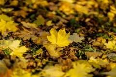 Fall Maple Leaf Tiled Wallpaper Leaves Seasons Stock Illustration Illustration Of Overlap