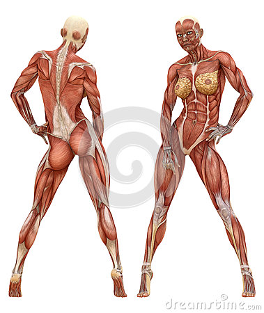 The Shape and Form 180209 by WarrenLouw Anatomical Correctness - muscle chart template