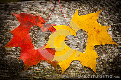 I Love You Heart Wallpaper 3d Animation Autumn Leaves And Love Hearts Royalty Free Stock Images
