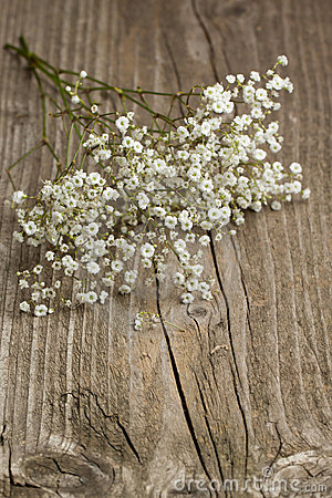 Free 3d Fall Wallpaper Bunch Of Gypsophila Baby S Breath Royalty Free Stock